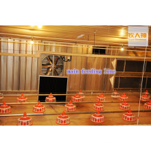 Customized Poultry Farm Equipment in Chicken House with Good Quality