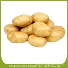 Variétés de pommes de terre