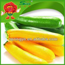 2015 Cor abobrinha para vender legumes frescos orgânicos