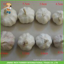 Chinesische Großhandelsfrische weiße Knoblauch 4.5CM 5.0CM 5.5CM 6.0CM Ineinander greifen-Beutel im 10KG Karton-guten Preis