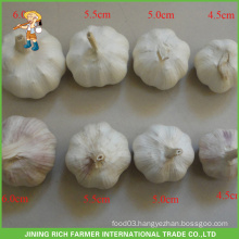 Chinese Wholesale Fresh White Garlic 4.5CM 5.0CM 5.5CM 6.0CM Mesh Bag In 10KG Carton Good Price