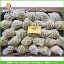 Super Qualität frische Shandong Birne