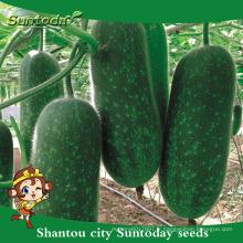 Suntoday assortiment de légumes végétale hybride F1 bouteille de jardin chieh-qua cire graines de courge (19005)