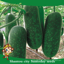 Suntoday assorted vegetable seedling vegetable hybrid F1 garden bottle chieh-qua wax gourd seeds(19005)