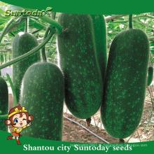 Suntoday ассорти овощной рассады овощных гибридные сад Ф1 Цзе-кВА бутылкой семена восковой тыквы(19005)