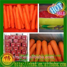 China Frischer Karottensamen von Qingdao Original