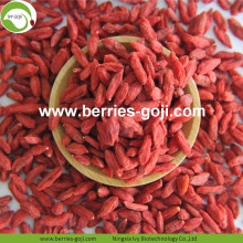 Factory Hot Sale Torkad Himalayan Goji Berry