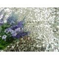 """POLY MESH WITH 6MM SEQUIN EMBD 50/52"""""""