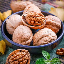 Wholesale Agriculture Products walnut natural nuts