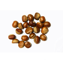 China First Quality Fresh Chestnut