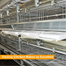 Complete poultry chicken farm equipment for broiler and breeders