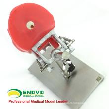 Super Septembre VENDRE 12558 Simulateur de mannequin d'étude dentaire en acier inoxydable