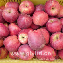 Высокое качество Fresh Huaniu Apple, FUJI Apple, Qinguan Apple