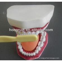 Новая модель медицинского стоматологического ухода, модель для чистки зубов