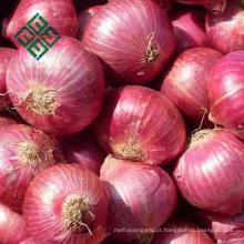 venda por atacado barato da cebola