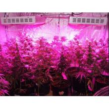 100X3w Full Spectrum cultivação LED crescer luz