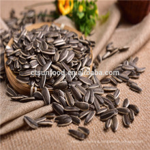 2019 new crop inner mongolia Confectionery sunflower seeds 5009