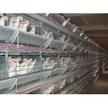H Type Poulet à griller automatique Poulet Oiseaux Cage à volaille