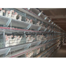 H Type Automatic Broiler Chicken Birds Poultry Cage