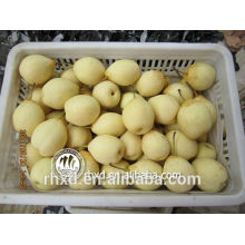 New crop Cheap Wholesale fresh fruit fresh Ya pears/fresh yellow dates/Organic Fresh Golden Pear