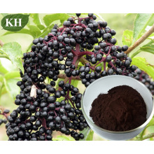 Elderberry Extract, Sambucus Nigra Extract, 5% to 35% Anthocyanidins