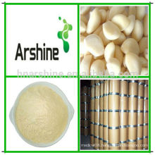 Natural Aged Garlic extract,Garlic P.E,Allium Sativum extract
