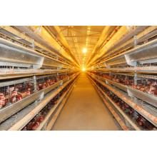 Automatische Schicht Huhn House mit Käfigen und Ausrüstungen