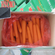 fresh carrots with packing vegetable fresh carrot