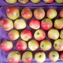 Unbagged Gala Apple for Bangladesh Market