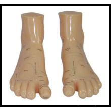 Massage Foot Model (M-9-17) Acupuncture