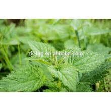 Super Grade Organic Nettle Leaf Powder