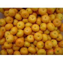 2014 neue chinesische frische Baby Mandarine