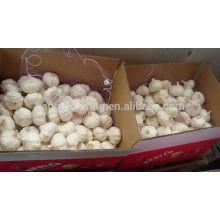 Red Garlic 10kg carton for Brazi market