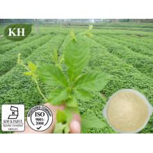 Gypenosides 80% Gynostemma Leaf Extract
