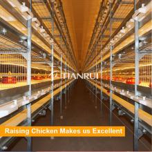 Tianrui Design Automatic Equipo de cría de broiler para 30000 pollos de engorde