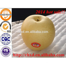 Китайский свежий новая цена груш века 10кг