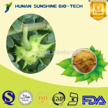 Neueste Biotechnology Produkte Braunes gelbes Pulver Tribulus Saponins Kraut Tribulus Terrestris Puder
