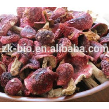 Venda quente cogumelo vermelho seco