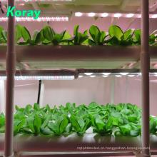 Sistemas de jardinagem hidropônicos internos