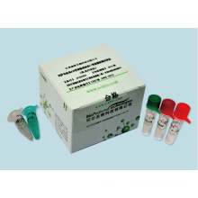 Varicella Zoster Virus Real Time PCR Kit