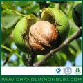 Mosaïque environ 4% de nourriture Alibaba Golden Fournisseur de Noix pour l'huile de noix