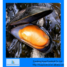 Perfekte gefrorene halbe Muschel Niedriger Preis