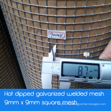 Galvanized Welded Square Mesh Wire Mesh - Hot Dipped Galvanized After Welding