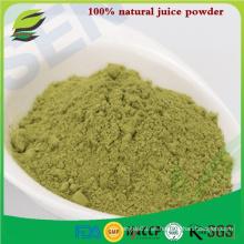 100% natural de cebada orgánica polvo de jugo de hierba