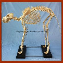 Modelo de esqueleto do cão grande do ensino médico