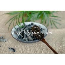 Cogumelo de fungo preto seco lavado orgânico