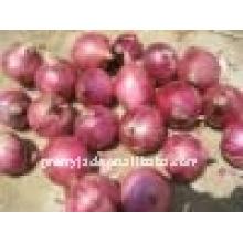 Frische rote Zwiebel aus China