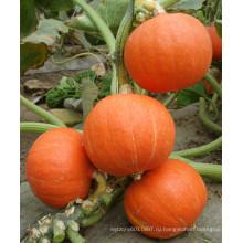 HPU05 Шиджи круглый оранжевый гибрид F1 тыквы семена