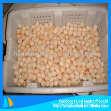 Supply good quality competitive scallop frozen bay scallop