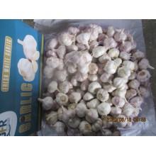2020 Normal White Garlic High Quality
